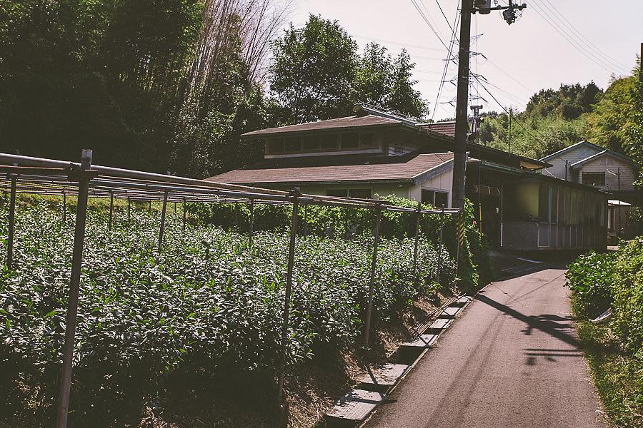 Yamashita-02-5.jpg