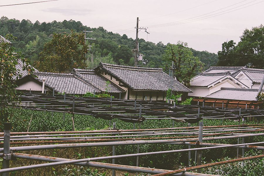Yamashita-05.jpg