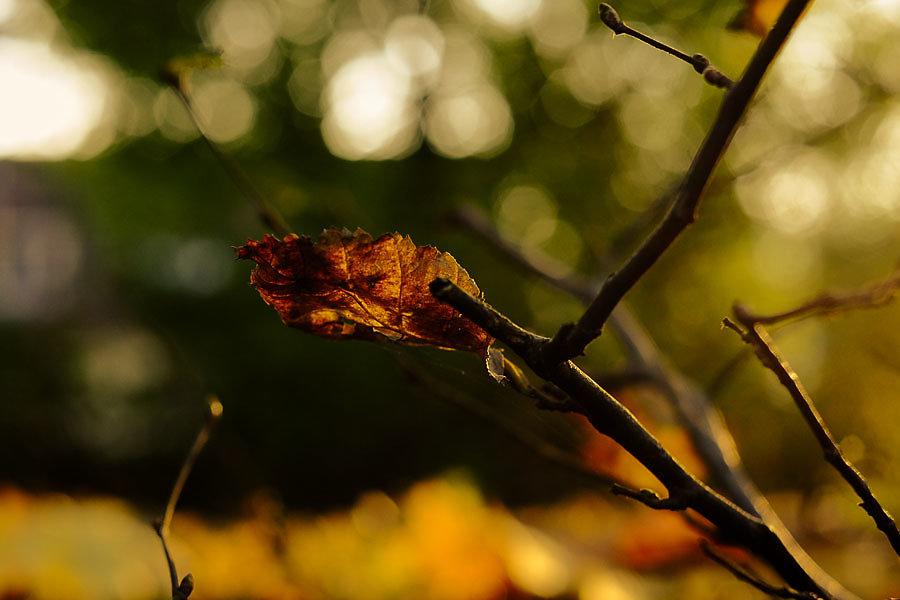 Autumn-28-15.jpg