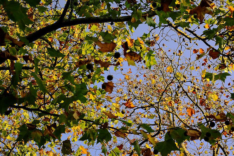 Autumn-28-17.jpg